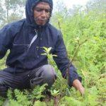Aser Taklale bersama kelompok tani Agape kembali memulai budidaya tanaman Apel. Nampak pohon apel yang berusia enam bulan. (ist)