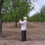 Penemu teknologi EM, Prof Dr Teruo Higa sedang mengamati pohon yang tampak menghijau di salah satu negara Eropa. (ist)