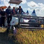 Gubernur NTT saat memanen padi menggunakan mesin panen di desa Manusak (ist)